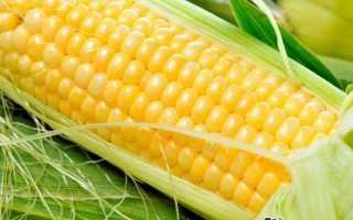 Кукуруза в початках. Семь способов приготовления кукурузы