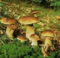 Являются ли грибы полезными, или вред от них несоизмеримо больше? Важная информация о грибах, их вреде, пользе и калорийности