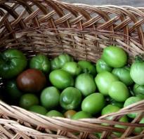 Салат из зеленых помидор на зиму — рецепты с фото пальчики оближешь