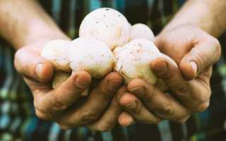 Салаты и закуски с сырыми шампиньонами: 8 рецептов