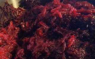 Икра из свеклы на зиму – рецепты приготовления икры через мясорубку, жаренной, в мультиварке, с добавлением других овощей, видео