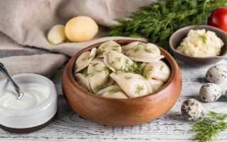 Вареники с картошкой и грибами – и мяса не надо! Подборка самых заманчивых рецептов вареников с картошкой и грибами
