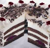 Торт Черный лес – рецепты пошагово с фото. Как приготовить немецкий вишневый торт Шварцвальд с видео