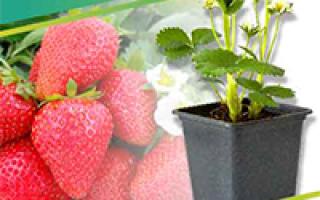 Пироги со свежими ягодами в мультиварке: рецепты