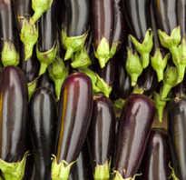Баклажаны с помидорами в мультиварке. Как приготовить баклажаны с помидорами в мультиварке. Баклажаны с помидорами в мультиварке – как приготовить баклажаны, простые рецепты для мультиварок