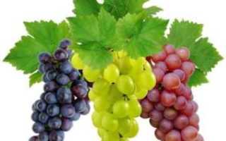 Варенье из винограда – 8 рецептов приготовления
